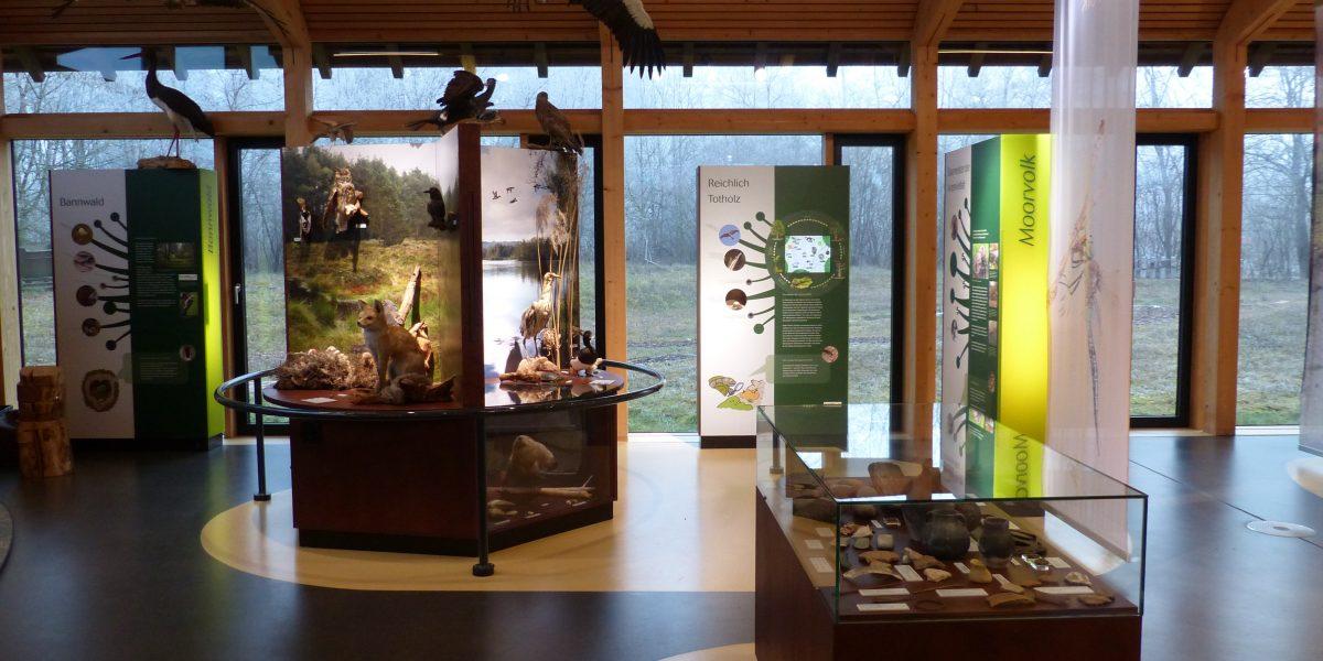 Tiere des Riedes in der Ausstellung des Naturschutzzentrums Wilhelmsdorf