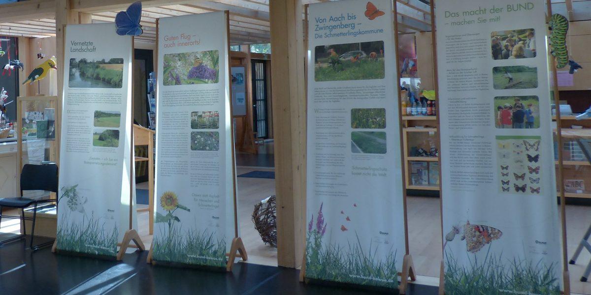 Bilder in Schmetterlingsausstellung im Naturschutzzentrum Wilhelmsdorf