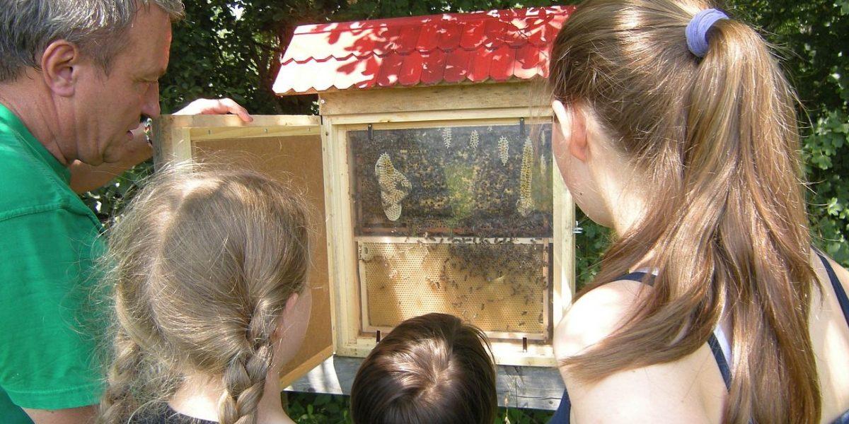 Bienenschaukasten der Bienen AG am Naturschutzzentrum Wilhelmsdorf