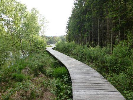 Bohlenweg im Prfunger-Burgweiler Ried