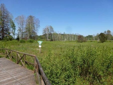 Überwachsener See Pfrunger-Burgweiler Riedlehrpfad