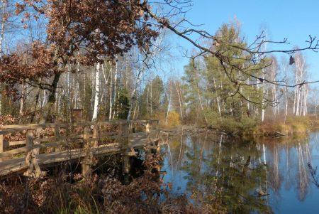 Steg Riedlehrpfad im Herbst