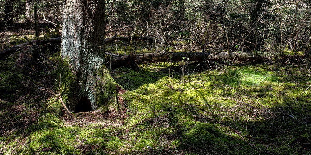 Beim Vogelsee im Pfrunger-Burgweiler Ried