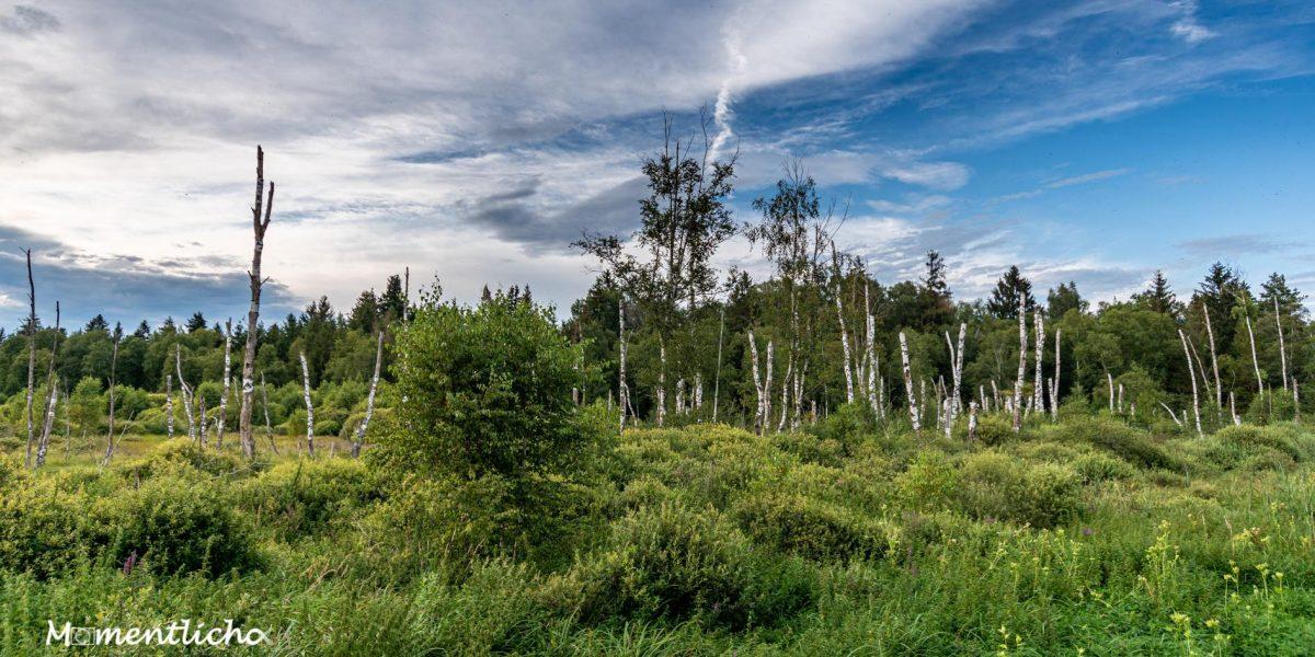 Moorlandschaft im Pfrunger-Burgweiler Ried