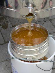Honig der Bienen-AG im Naturschutzzentrum Wihelmsdorf