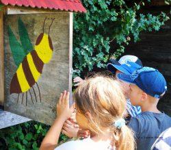 Kinder am Bienenschaukasten des Naturschutzzentrum Wilhelmsdorf