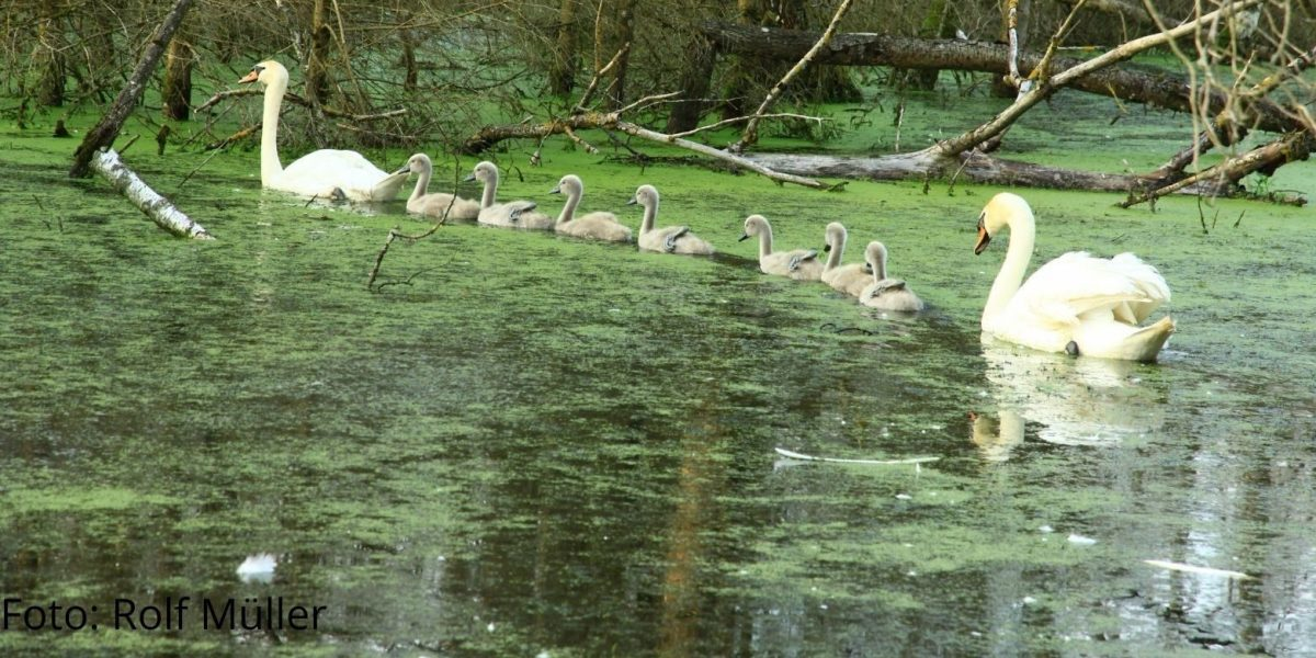Naturfotografie im Pfrunger-Burgweiler Ried